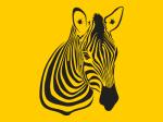 zebra_1x